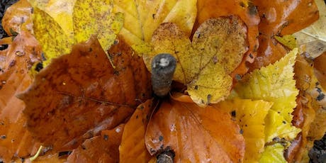 Autumn Equinox with Greenwood Growth tickets