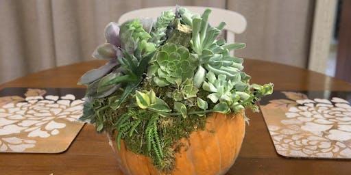 Succulent Pumpkin Workshop 2019