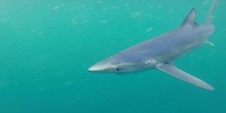 An Evening With The Blue Shark Project tickets