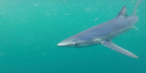 An Evening With The Blue Shark Project