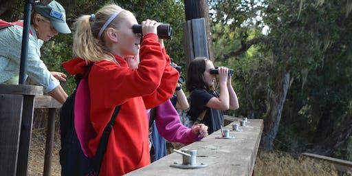 Autumn Shorebirds on the Bolinas Lagoon: Guided Birding with Nils Warnock