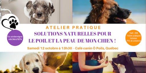Atelier Solutions naturelles pour le poil et la peau de mon chien