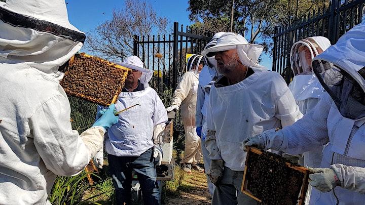 Sydney Bee Club Apiary Field Day image