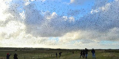 Wader Spectacular at RSPB Snettisham