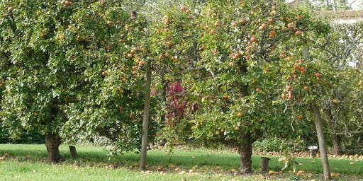 Houghton Lodge Apple Day & Wassailing