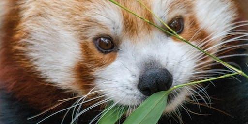 Breakfast with the Animals: Zoo Comfort Food