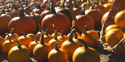 Our Little Pumpkin Patch