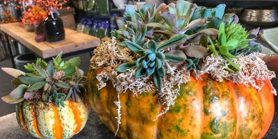 Wine & Design: Succulent Pumpkin Centerpieces