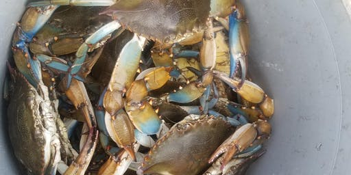 Crabbing with a Lowcountry Boil HOW Event