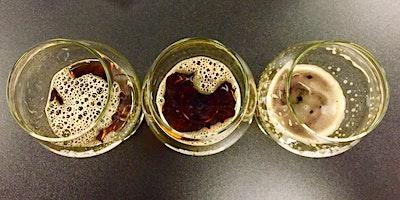Tastings for Advanced Beer Academics