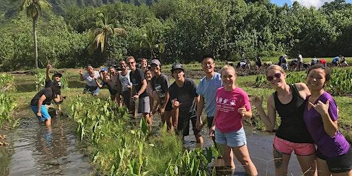 Kualoa/Hakipuʻu Loʻi - taro planting and harvesting