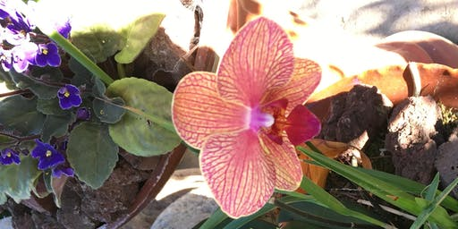 Orchid Care Basics and Repotting