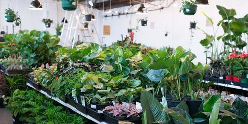 Melbourne - MEGA Indoor Plant Sale - Springtime Splendour
