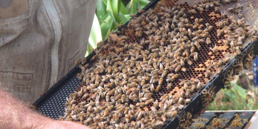 Waiheke Garden Festival:  Honey House Bees in the Ecosystem