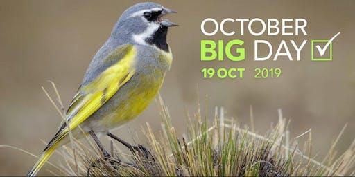 October Big Day with Feminist Bird Club