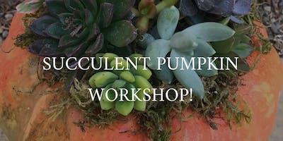 Mia Bella's Boutique Pumpkin Succulent Workshop