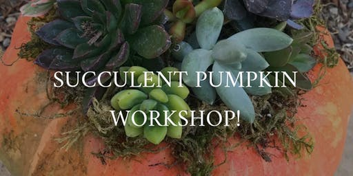 Mia Bella's Boutique Pumpkin Succulent Workshop
