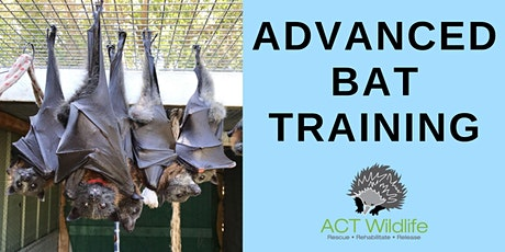Copy of Advanced Bat Training tickets