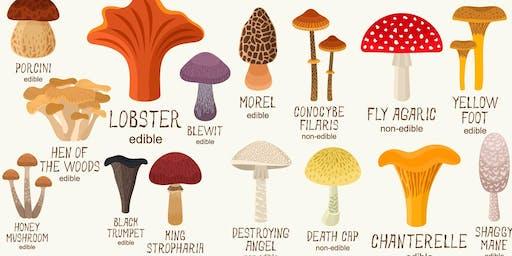 Beginners Mushroom ID Workshop