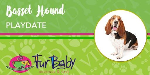 Basset Hound Dog Playdate