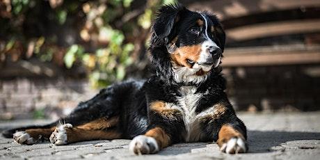 Ik zou een hond in huis willen nemen! tickets