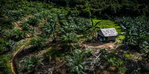 Policy Dialogue: Toward Sustainable Palm Oil in Indonesia