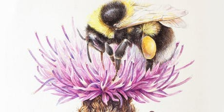 Insect and Botany Watercolours  tickets