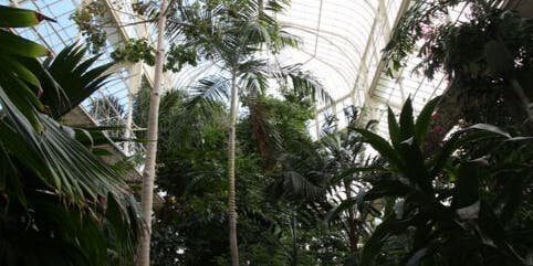 THEMED GUIDED TOUR: Plants of the Rainforest