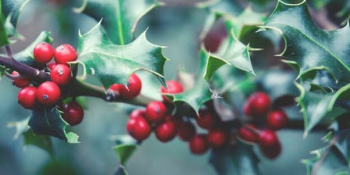 THEMED GUIDED TOUR: Festive Winter Plants