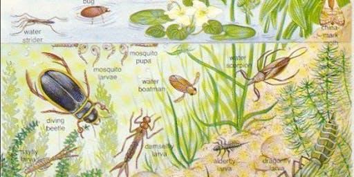 Pond Invertebrate Course