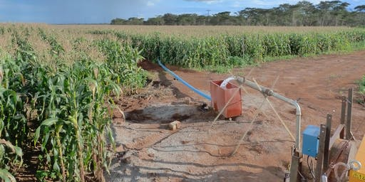 Surviving the Anthropocene: the role of groundwater