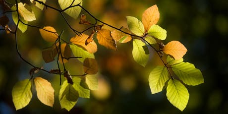 Woodland photography with Fran Halsall tickets