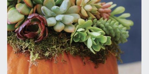 Make it & Take it: Succulent Pumpkin