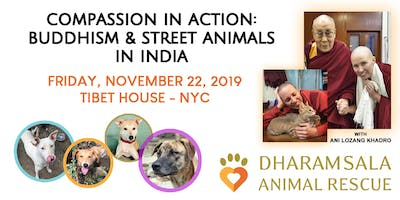 Compassion In Action: Buddhism and Street Animals In India
