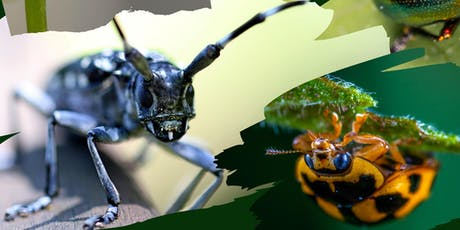 weeSTEMs bugs - September 28th Session 9.30am (age 0-4) tickets