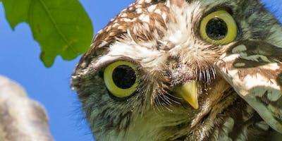 Owl and Hare Safari