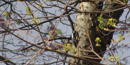 QCBC Prospect Park Bird Walk