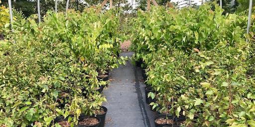 Tree Giveaway: Verona/Oakmont/Penn Hills