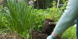 Planting Perennials in the Fall