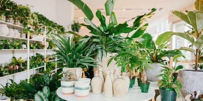 Basic Indoor Plant Care & Selection