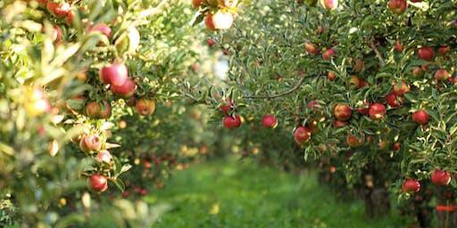 Apple Picking Rosh Hashana Event