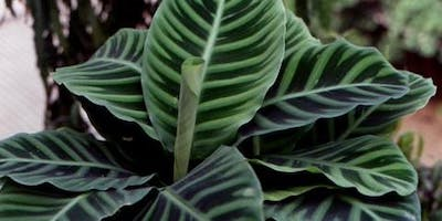 Non-Toxic/Pet-Safe Indoor Plants