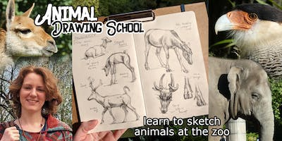 Animal Drawing School: Learn to Sketch at the Zoo