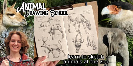 Animal Drawing School: Learn to Sketch at the Zoo Tickets