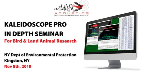 Kaleidoscope Pro for Bird & Land Animal Research, New York: Nov 8