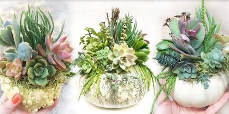 DIY Succulent Pumpkin Centerpiece with The Sill x WestWind Succulents  tickets