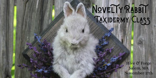 Novelty Taxidermy Rabbit Workshop November 17th