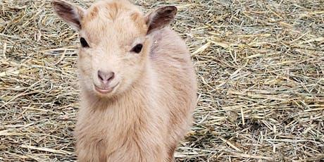Goat Workshops tickets