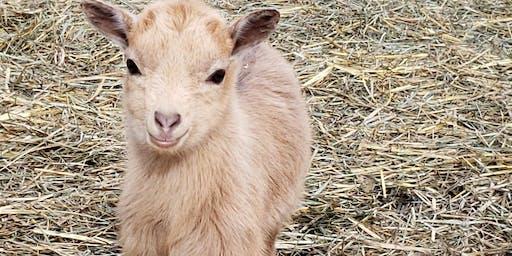 Goat Workshops