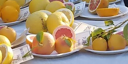 Maricopa County Master Gardener Citrus Clinic- West Valley 2020